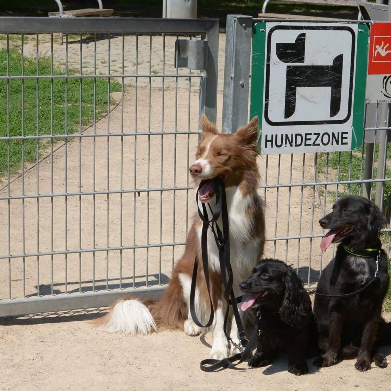 Hundezone 02.jpg