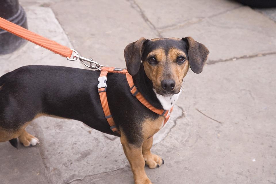 Pies Na Smyczy.jpg